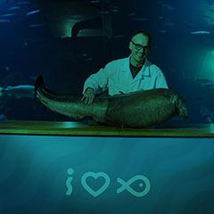 Doktor Knivskarp dissekerer en havål!