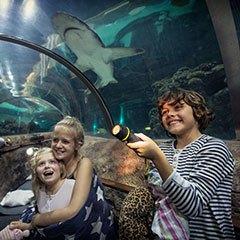 Zzzzzzzov med hajerne for familier!