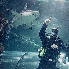 Dyk med hajer i Kattegat- centret!