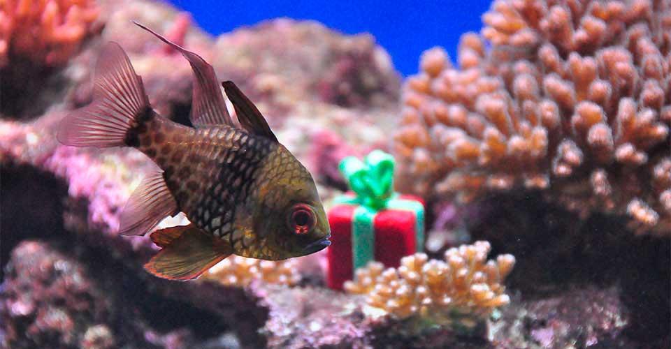 """Find alle """"julepakkerne"""" i akvarierne i december og vind en julegave!"""