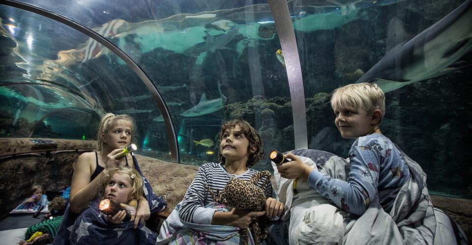Zzzzov med hajerne i Kattegatcentret og få en oplevelse for livet!
